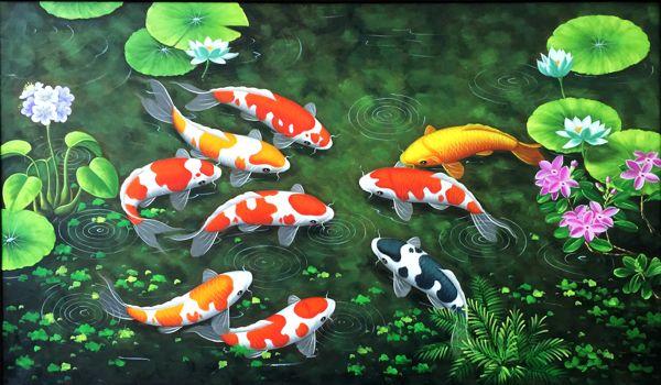 Bệnh ở cá Koi và cách hạn chế bệnh