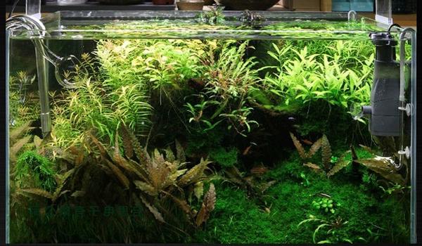 Hướng dẫn cách diệt tảo xanh cho hồ cá koi